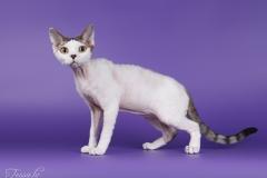 Cat Jarod