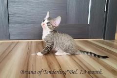 Briana of Tenderling*Bel. Female.