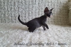 Belinda of Tenderling*Bel. Female.