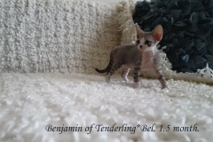 Benjamin of Tenderling*Bel. Male.