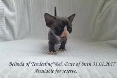 Belinda of Tenderling*Bel. Female.