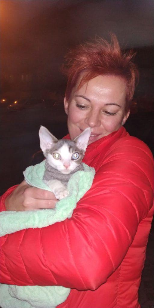котенок живет в Венгрии